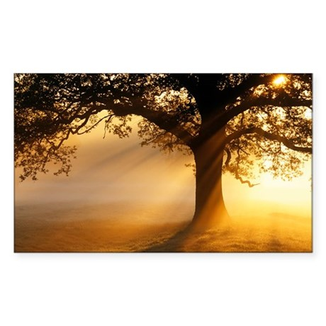 Oak tree at sunrise - Sticker (Rectangle)
