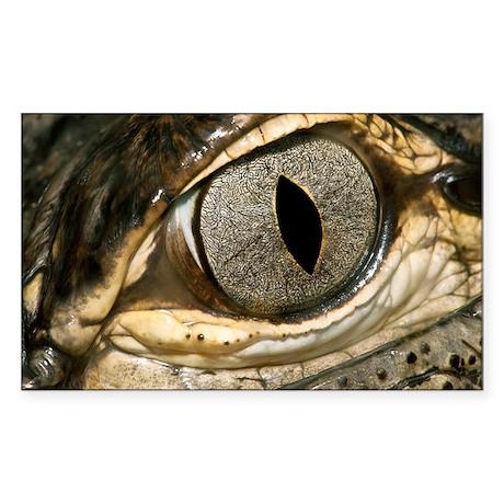 American alligator eye - Sticker (Rectangle)