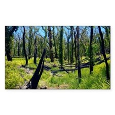 Forest fire regeneration - Decal