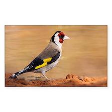 European Goldfinch - Decal