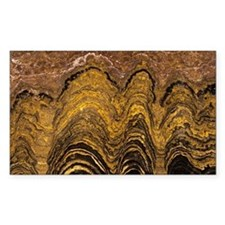 Fossil stromatolite - Decal
