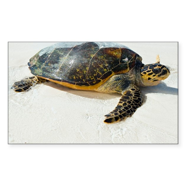 Hawksbill Sea Turtle Sticker Rectangle By Sciencephotos