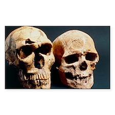 skulls - Decal