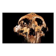 Paranthropus boisei skull - Decal