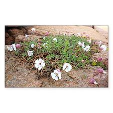 Silene uniflora flowers - Decal