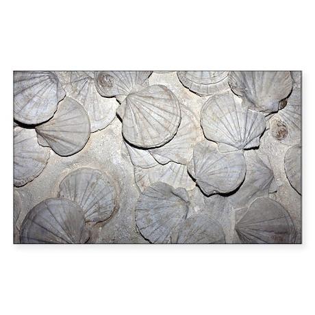 Scallop fossils - Sticker (Rectangle)