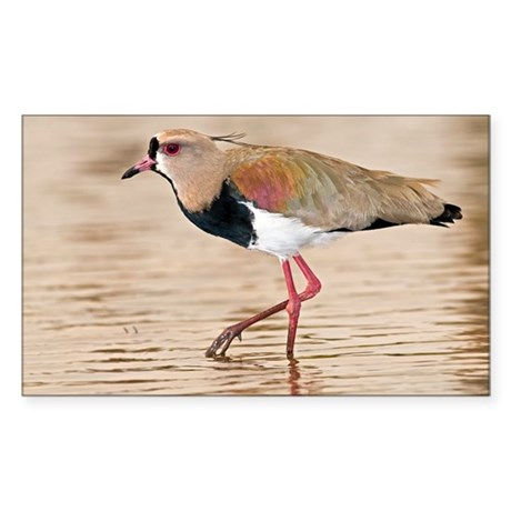 Southern lapwing - Sticker (Rectangle)