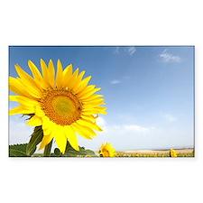 Sunflowers - Decal