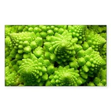Romanesco cauliflower head - Decal