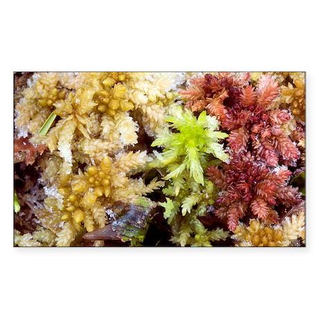 Peat mosses (Sphagnum sp.) - Sticker (Rectangle)