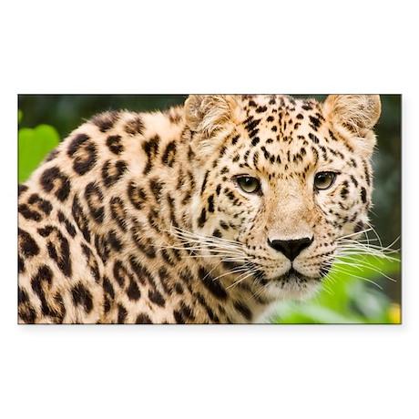 Amur leopard - Sticker (Rectangle)
