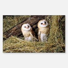 Barn owls - Decal