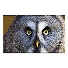 Great grey owl - Decal