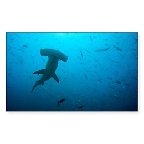 Hammerhead shark - Sticker (Rectangle)