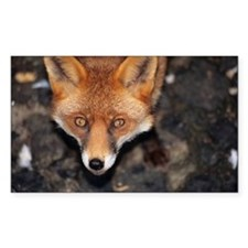Red fox - Decal