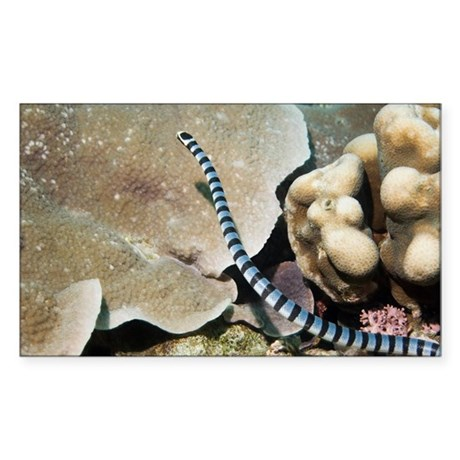 Sea krait - Sticker (Rectangle)
