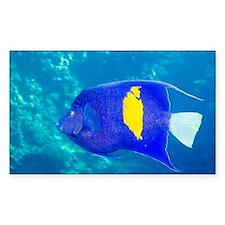 Yellowbar angelfish - Decal