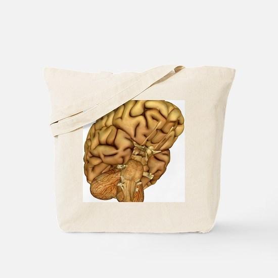 Brain anatomy - Tote Bag