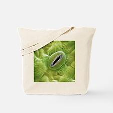 French lavender leaf pore, SEM - Tote Bag