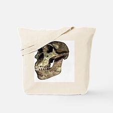 Australopithecus afarensis, artwork - Tote Bag