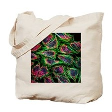 HeLa cancer cells - Tote Bag