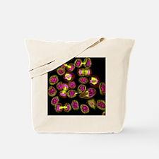 Mitosis, light micrograph - Tote Bag