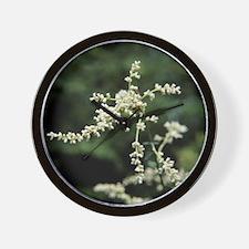 Artemisia flowers - Wall Clock