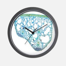 Water lily leaf, light micrograph - Wall Clock