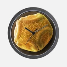 Alder tree pollen grain, SEM - Wall Clock