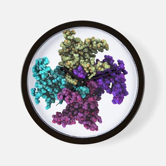Mitochondrial RNA binding proteins - Wall Clock