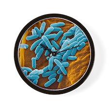 Pseudomonas aeruginosa bacteria, SEM - Wall Clock