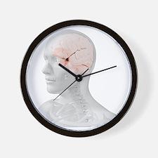 Head anatomy, artwork - Wall Clock
