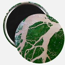 Amazon delta, Brazil - Magnet