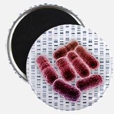 E coli bacteria, artwork - Magnet