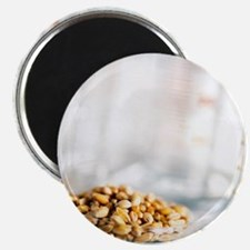 Food research - Magnet