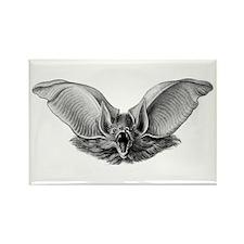Haeckel Vampire Bat Rectangle Magnet