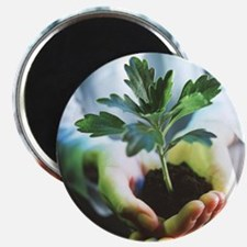 Genetically modified plant - Magnet