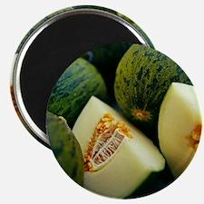 Melons - Magnet