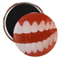 Toy teeth - Magnet