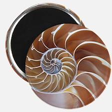 Nautilus shell - Magnet