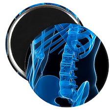 Lower spine, artwork - Magnet