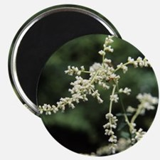 Artemisia flowers - 2.25