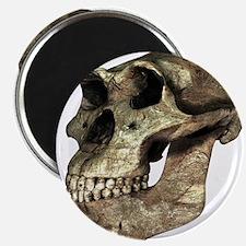 Australopithecus afarensis, artwork - 2.25