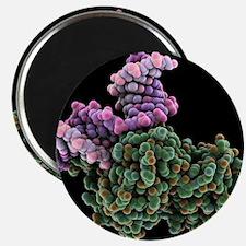 DNA repair molecule, artwork - 2.25