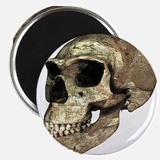 Neanderthal skull - 2.25
