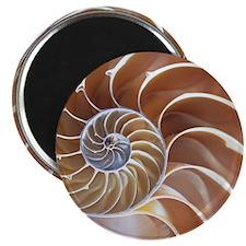 Nautilus shell - 2.25