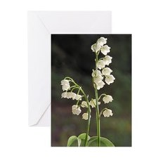 LILY OF VALLEY Greeting Cards