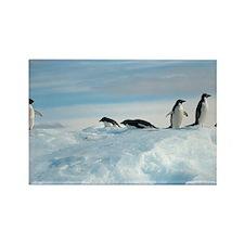 Adelie penguins - Rectangle Magnet