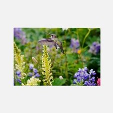 Calliope Hummingbird - Rectangle Magnet