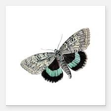 """Moth Square Car Magnet 3"""" x 3"""""""